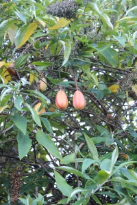 Banana Passionfruit